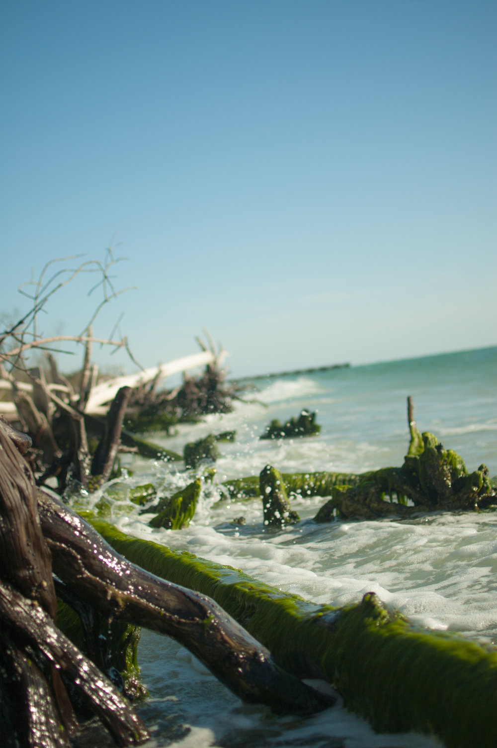 seaweed edit-7934.jpg