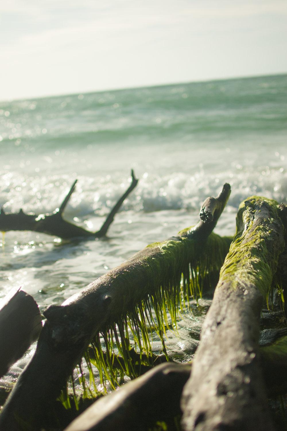 seaweed edit-7962.jpg