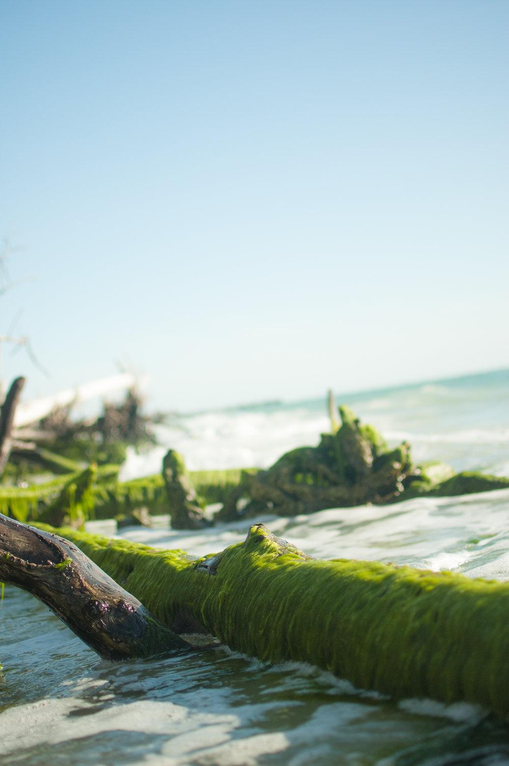 seaweed edit-7928.jpg