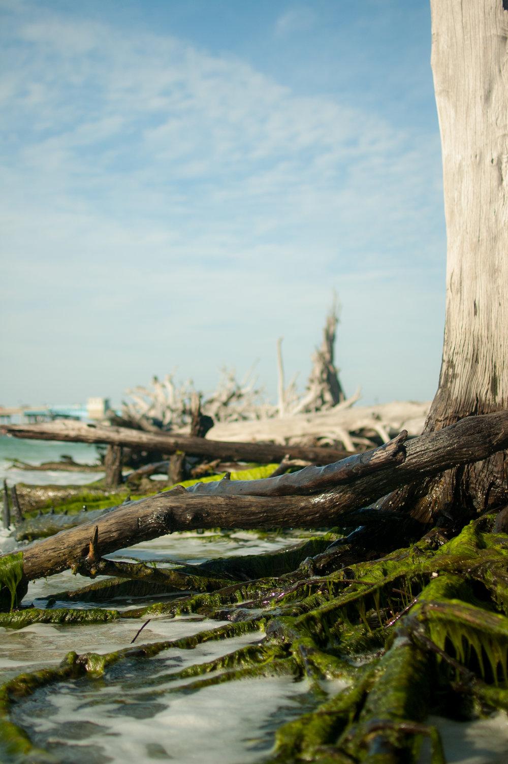 seaweed edit-7948.jpg