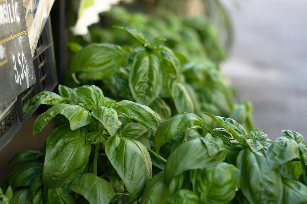 Indoor Herb Garden 2.jpg