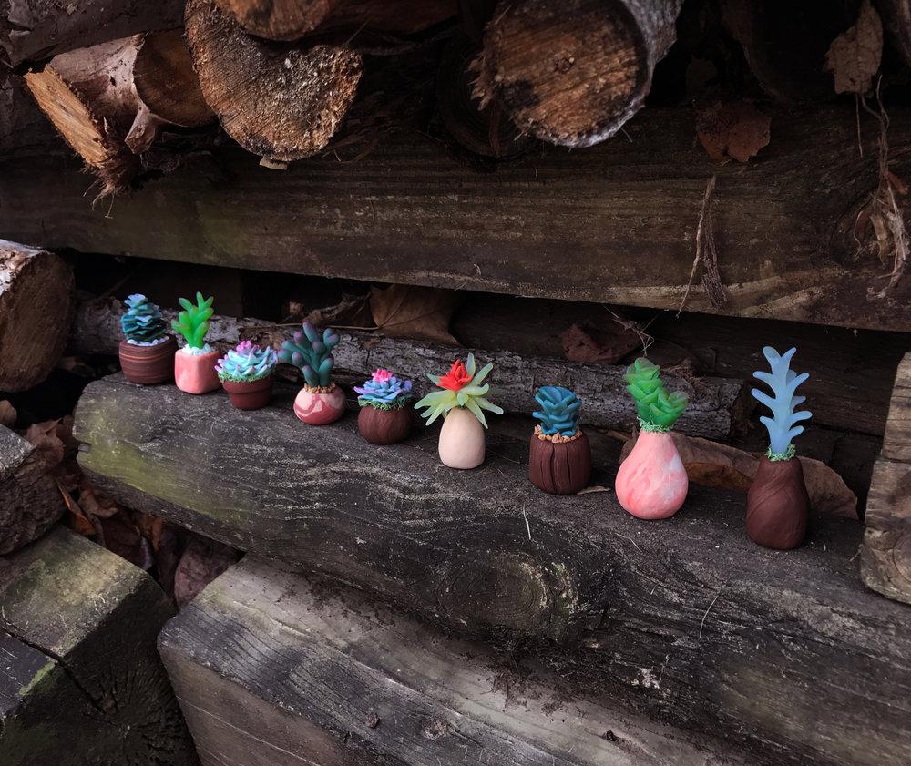 all-plants.jpg