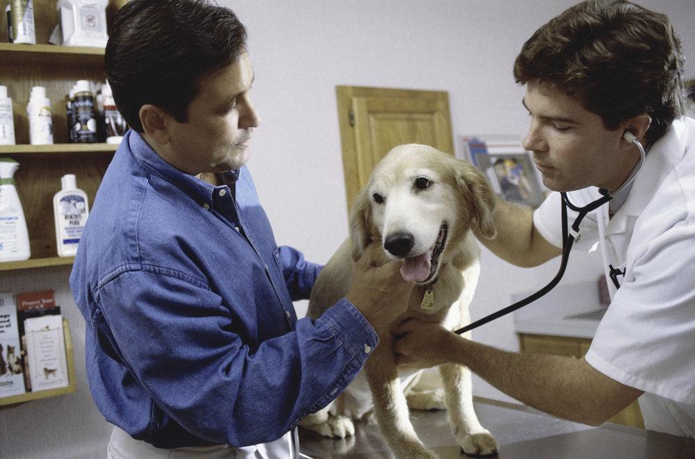 Veterinarians -