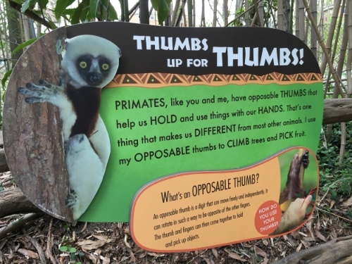 The highlight of the Jungle Trails attraction.  Aside from these signs, there was not much to look at.