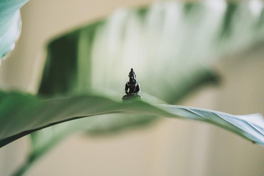 buddha on leaf opt.jpg