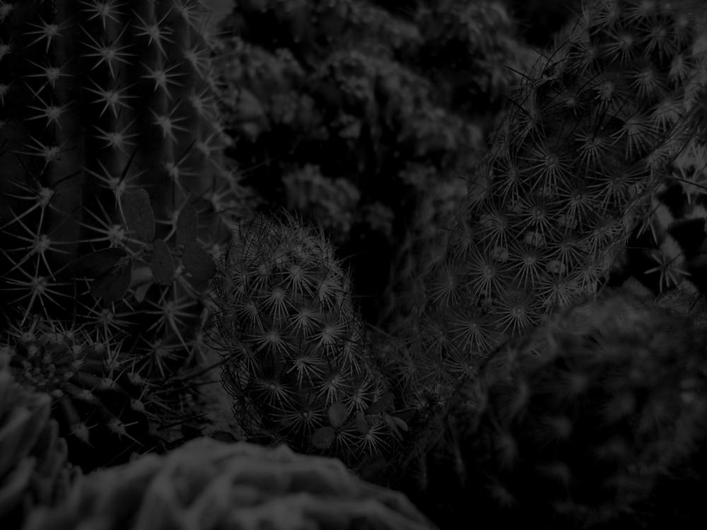 kidstechno cactus.jpg