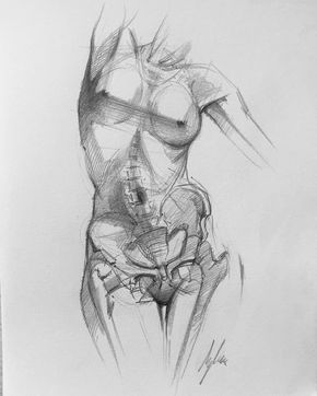 female pelvis image.jpg
