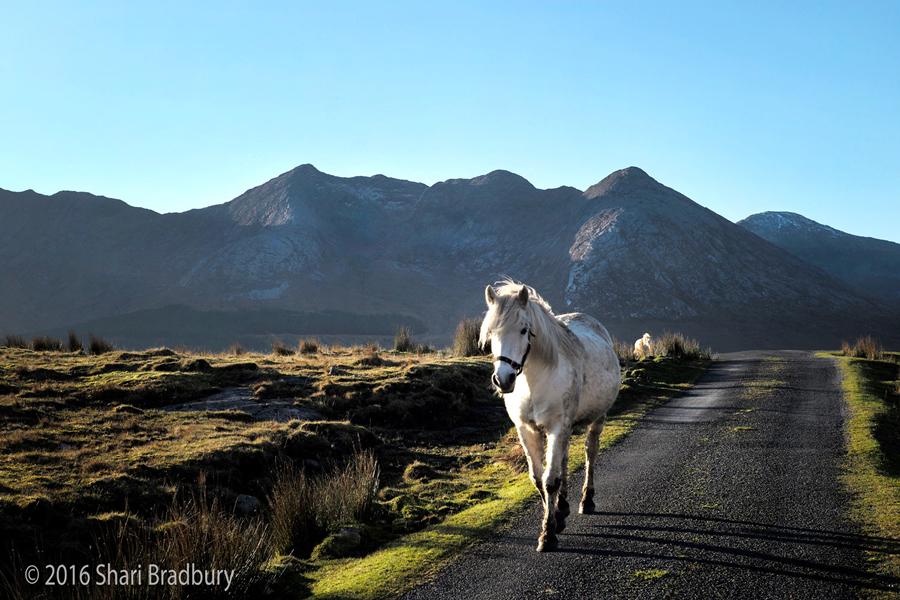 Horse_900.jpg