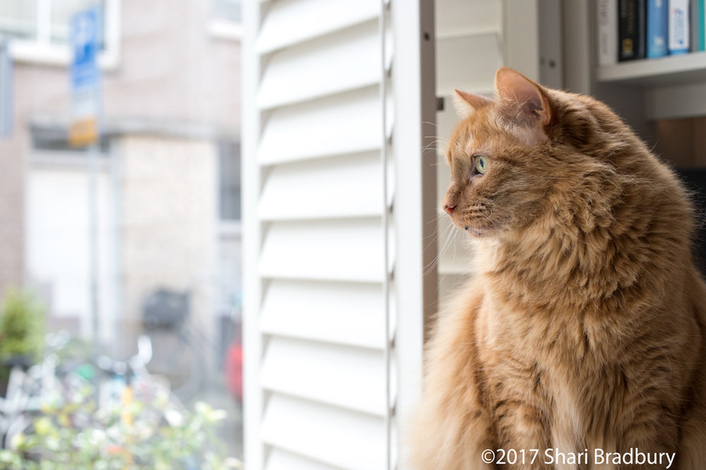 This is Lennox who loves to watch the world go by.  Many people passed by our window each day and most of them stopped to take his photo.  I'm sure he's very famous all over social media because of this.