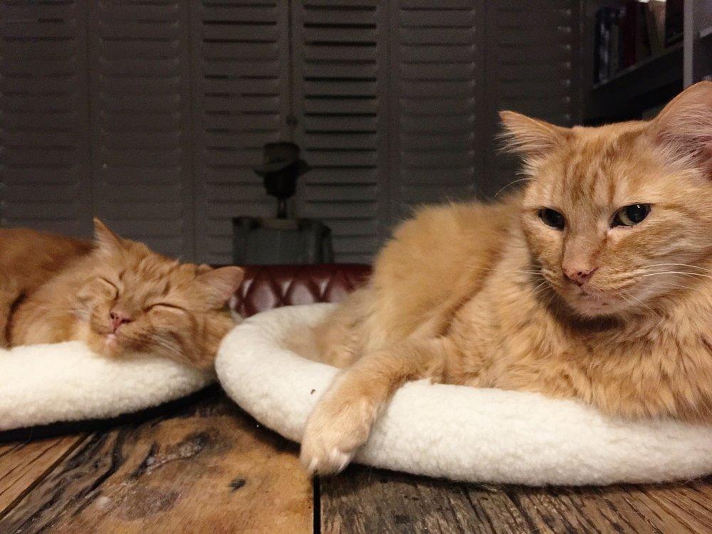 Garfield and Lennox. We love you!
