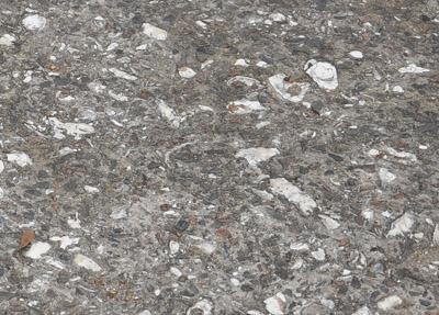Concrete with shells - E St Julian St 002detail_sm.jpg