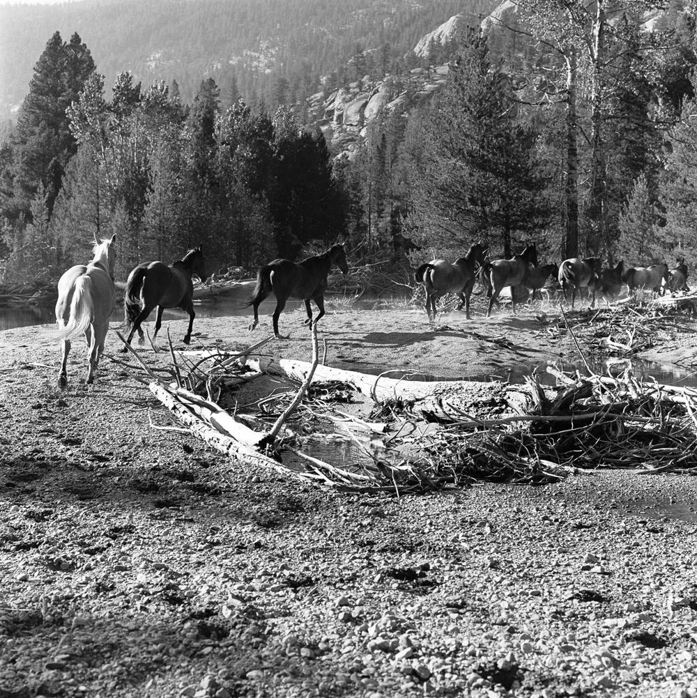 horse-2-6.jpg