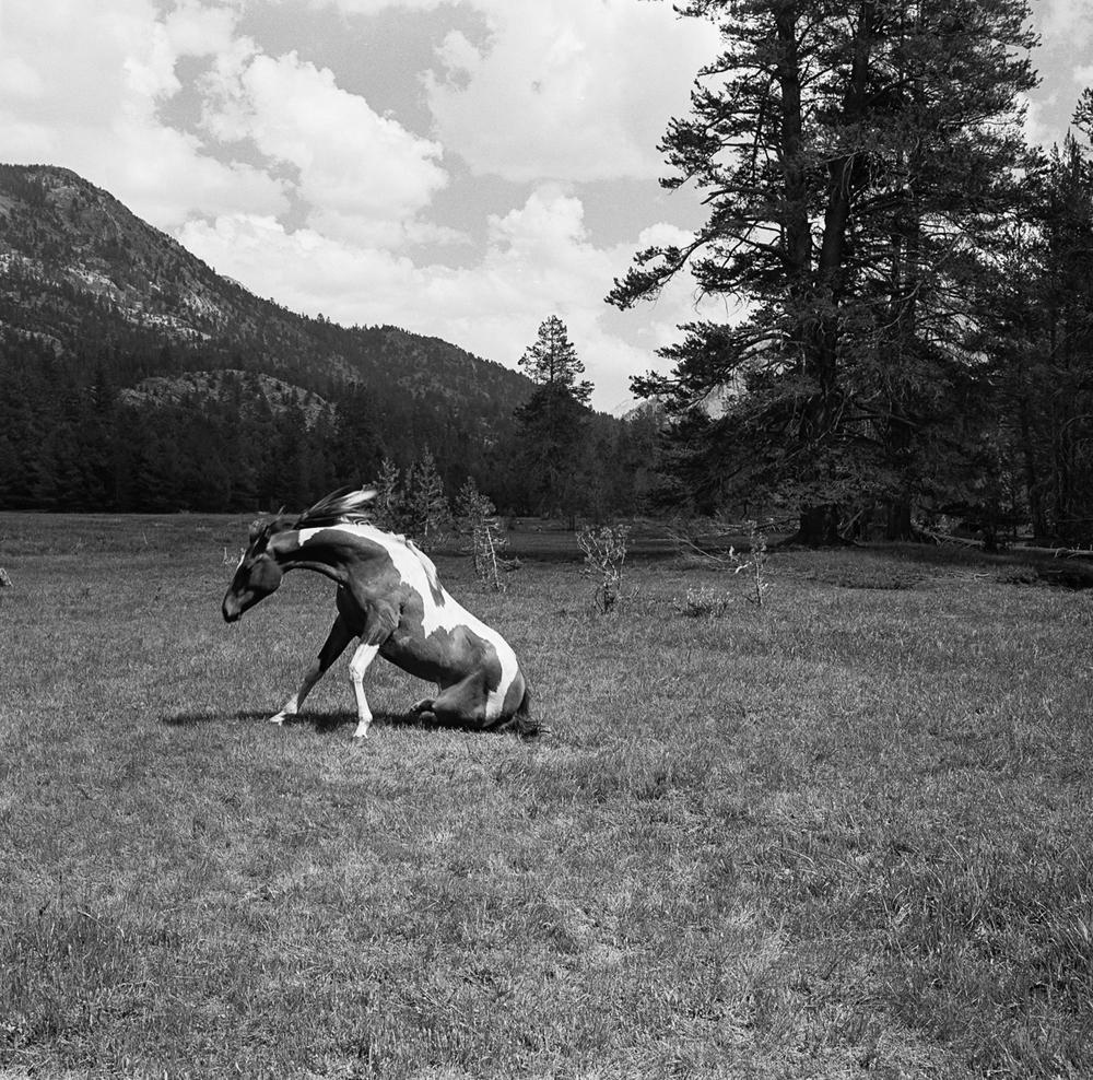 horse-1-9.jpg