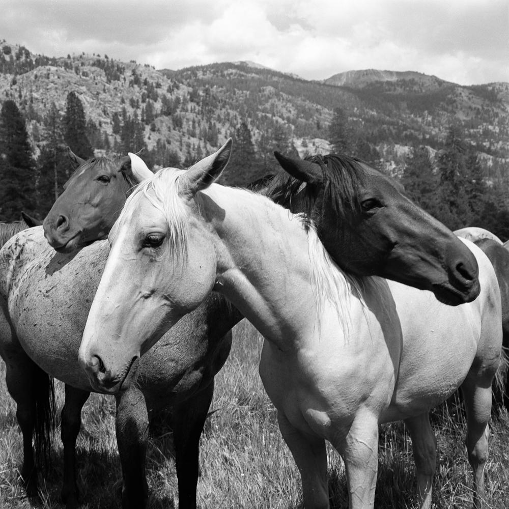 horse-2-8.jpg