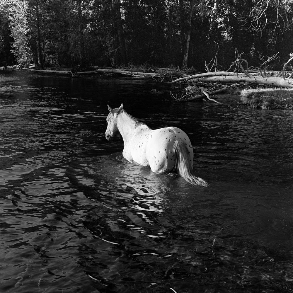 horse-1-3.jpg