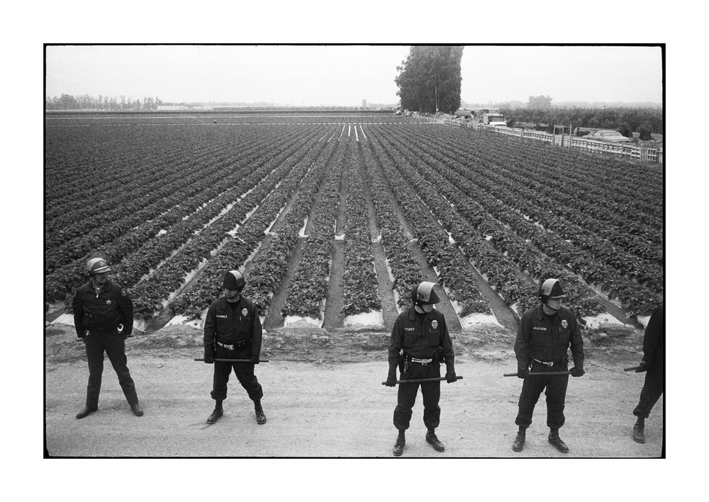 farmworkers-1-40.jpg