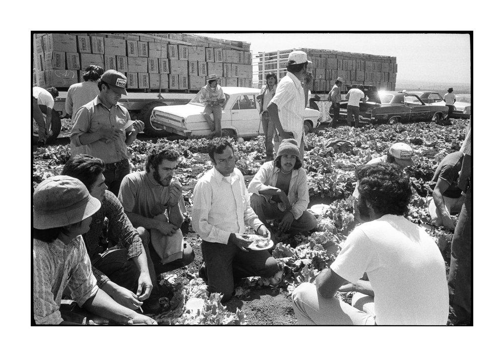 farmworkers-1-98.jpg