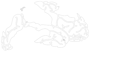 BRAINEWAVE CONSULTING