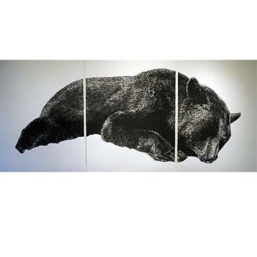 "Wesley Berg Fallen Bear, 2011, 50"" x 114"", charcoal on paper"