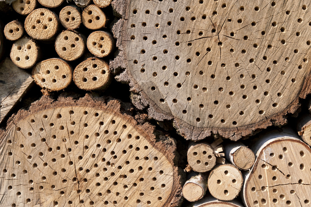 detail-of-an-insect-hotel_fyqJRX9_.jpg