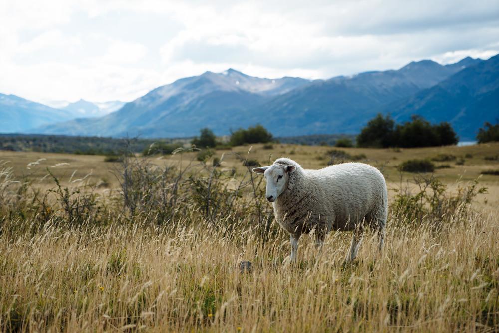 wrenee-el-calafate-patagonia-argentina-8.jpg