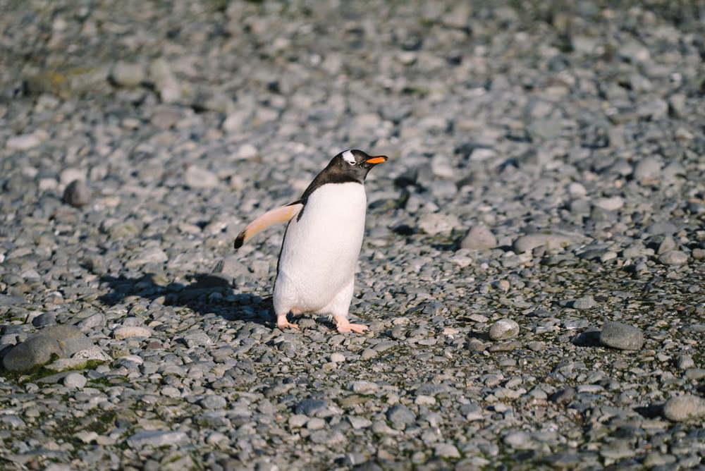 yankee-harbor-antarctica-wrenee-2.jpg