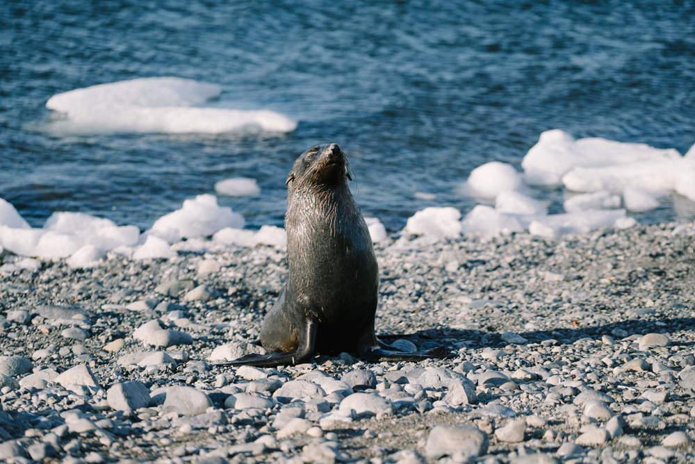 yankee-harbor-antarctica-wrenee-4.jpg