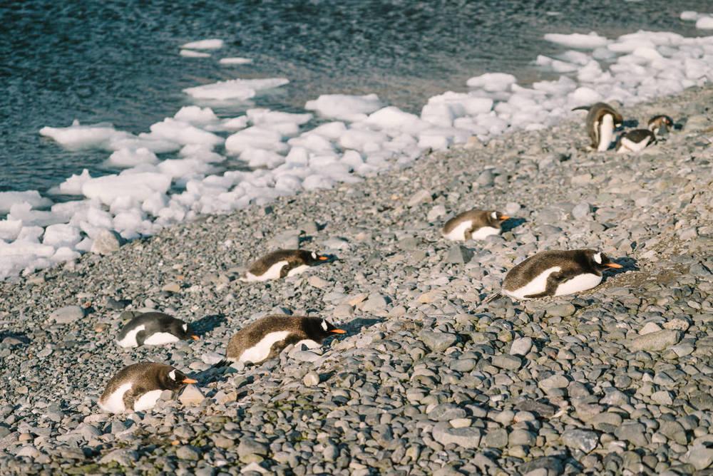 yankee-harbor-antarctica-wrenee-3.jpg