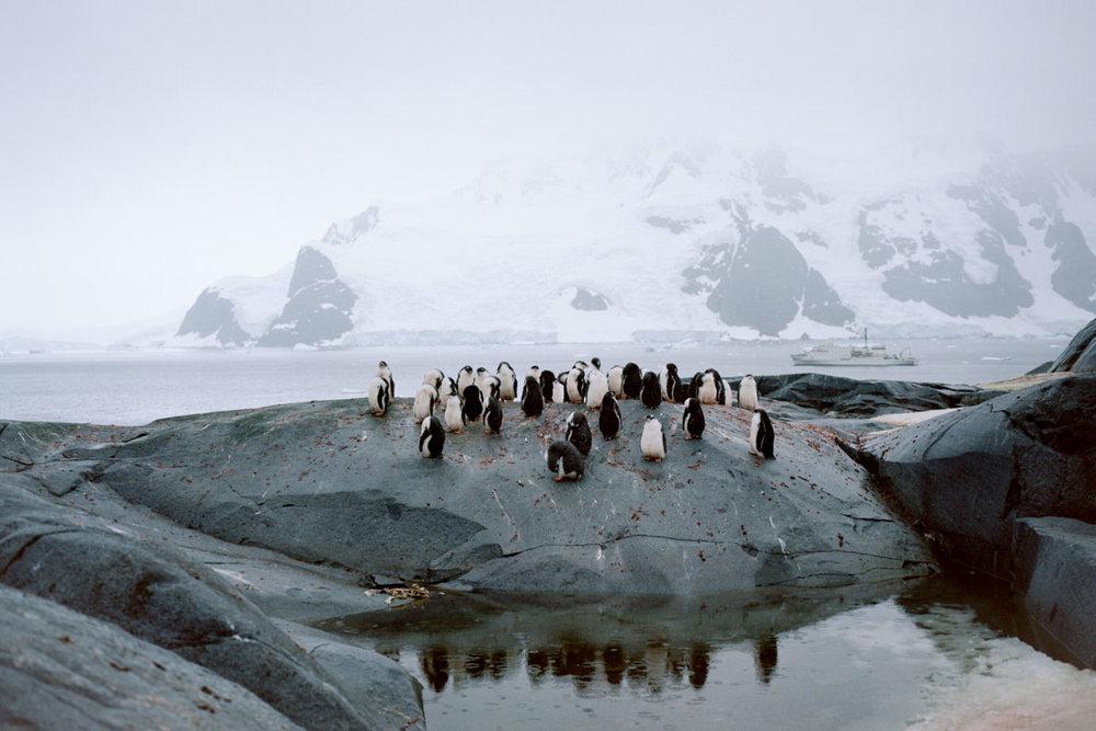 wrenee-antarctica-pleneau-island-gentoo-penguins-3.jpg