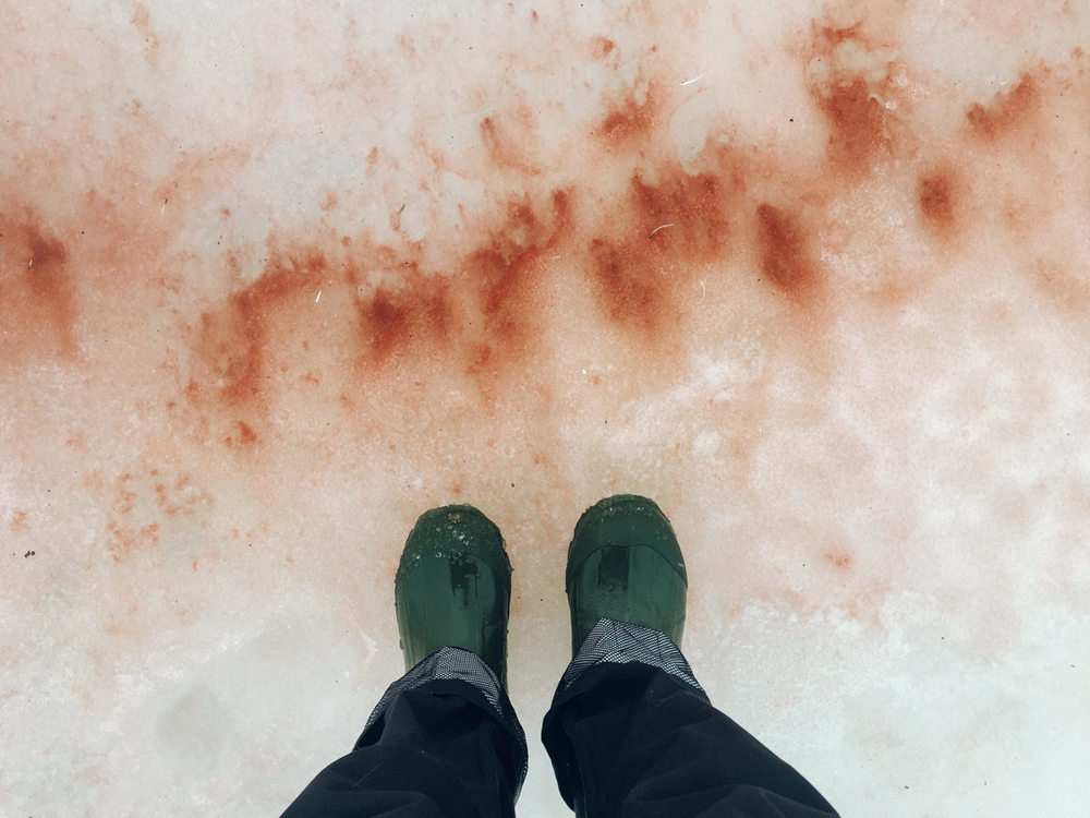 wrenee-antarctica-pleneau-island--6.jpg