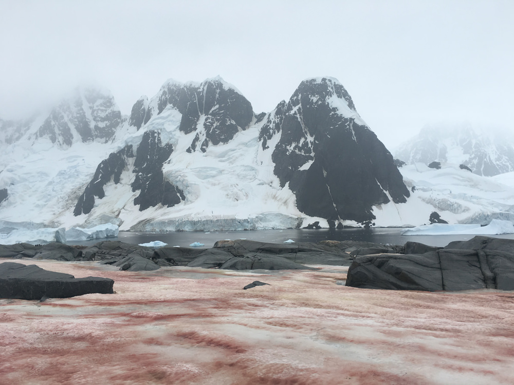 wrenee-antarctica-pleneau-island--7.jpg