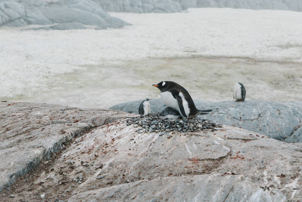 wrenee-antarctica-petermann-island-11.jpg