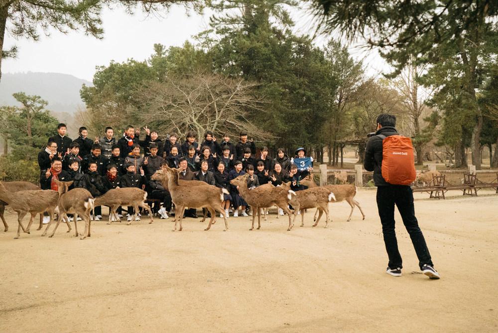 wrenee-nara-deer-park-japan-10.jpg