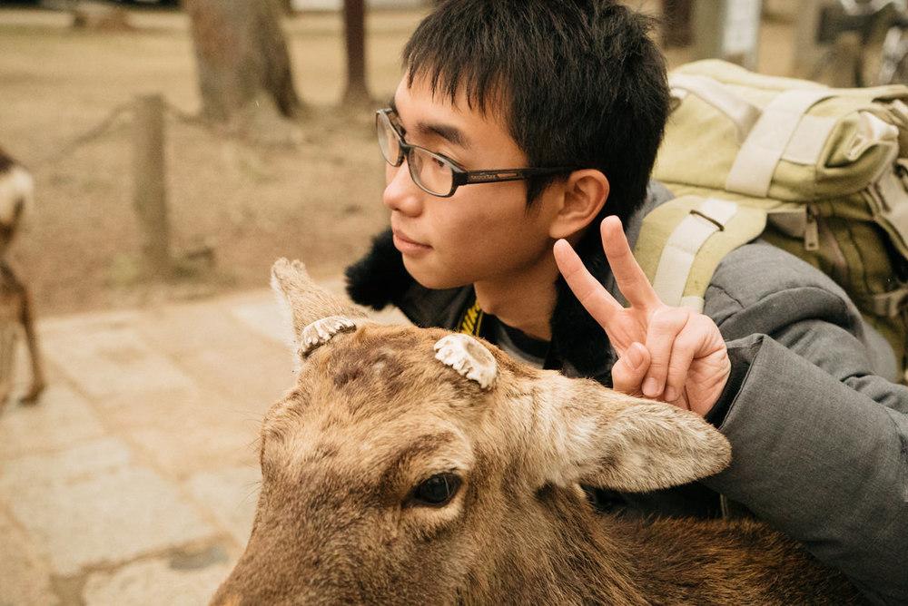 wrenee-nara-deer-park-japan-8.jpg