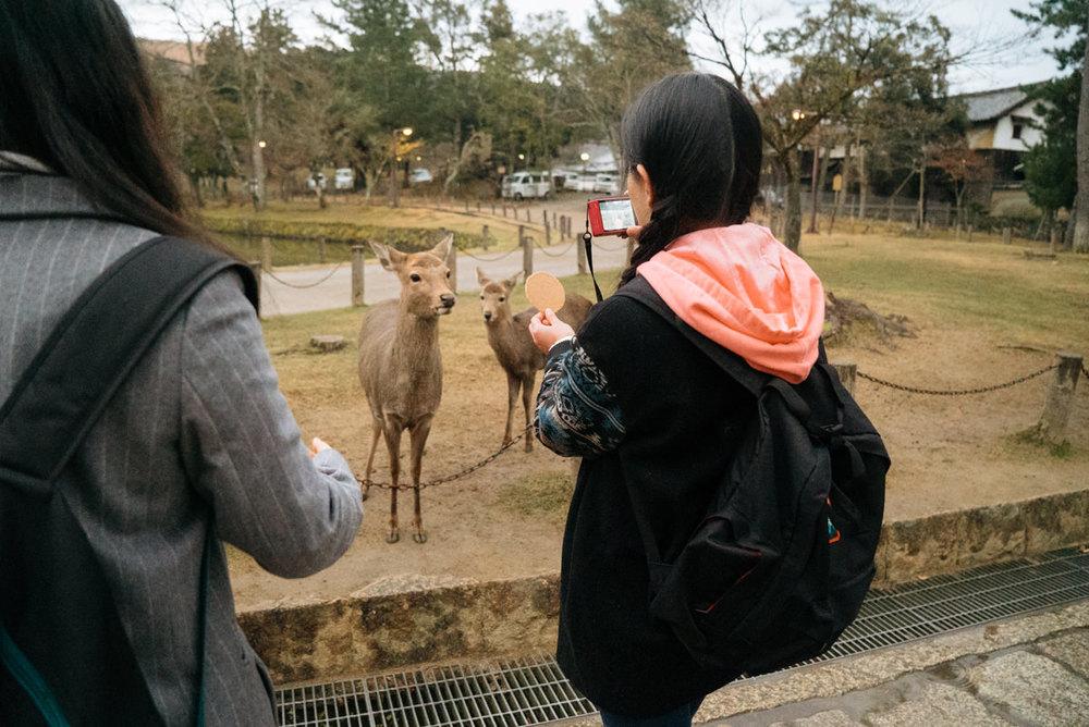 wrenee-nara-deer-park-japan-17.jpg