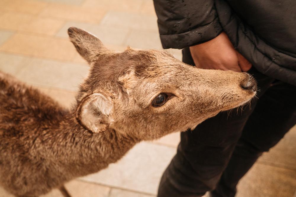 wrenee-nara-deer-park-japan-26.jpg