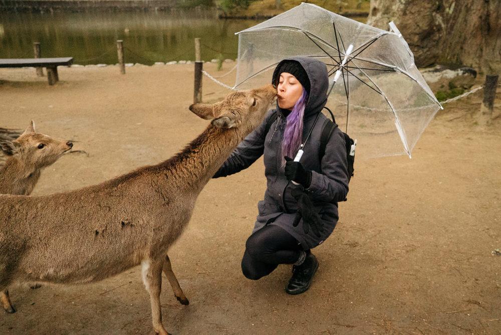 wrenee-nara-deer-park-japan-15.jpg