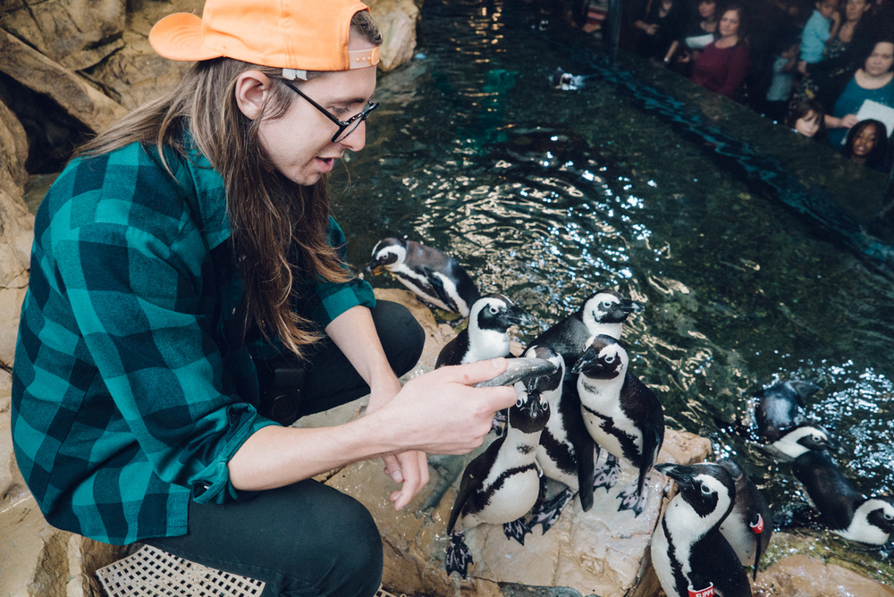 Jason feeding the penguins.  They are hand fed and the staff records how many fish each bird eats to be sure everyone is getting the right amount of food and vitamins.