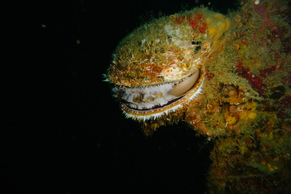 renee-lusano-coron-rocksteady-scuba-dive-8.jpg