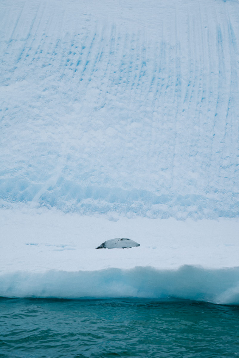 wrenee-antarctica-almirante-brown-6.jpg