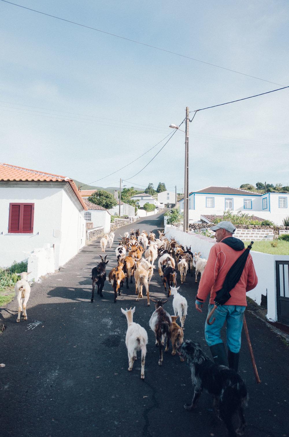 wrenee-renee-lusano-azores-portugal-12.jpg
