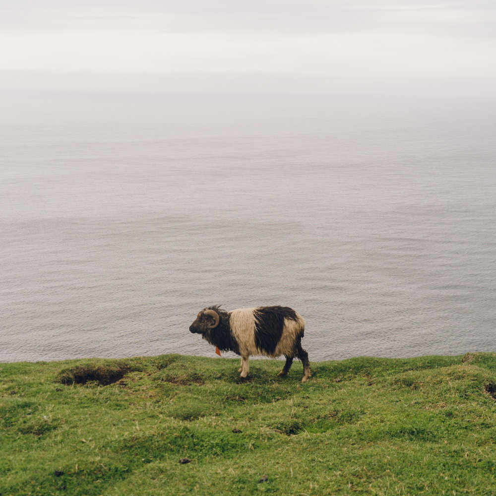 wrenee_faroe_islands-38.jpg