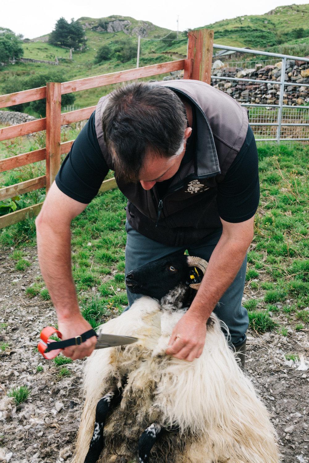 sheep_farms-2.jpg