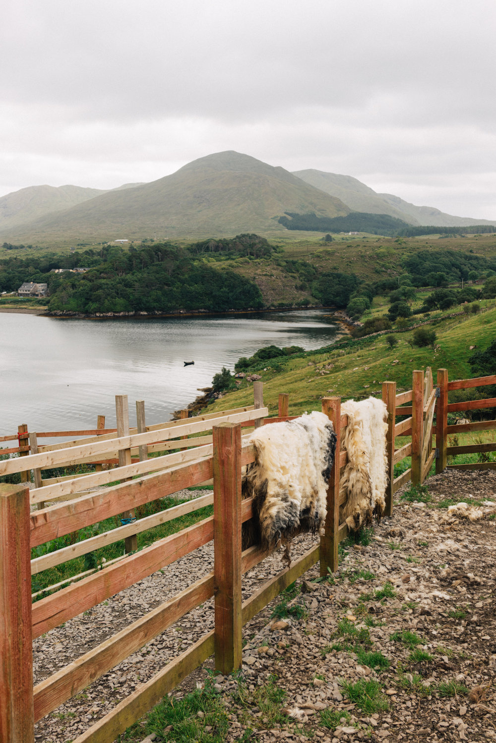 sheep_farms-3.jpg