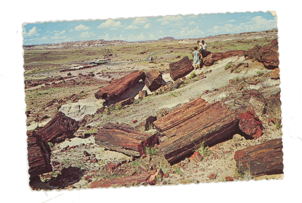 petrified_forest_postcard.png
