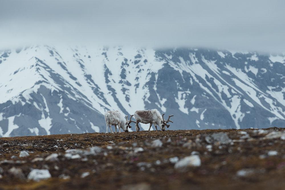 Svalbard June 2018-53.jpg