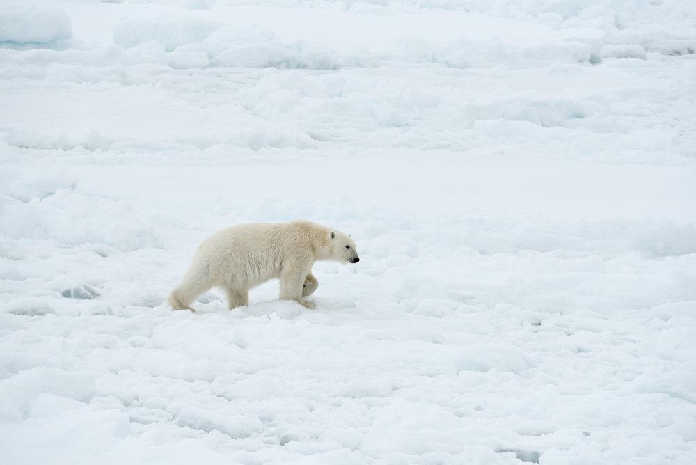 Svalbard June 2018-35.jpg