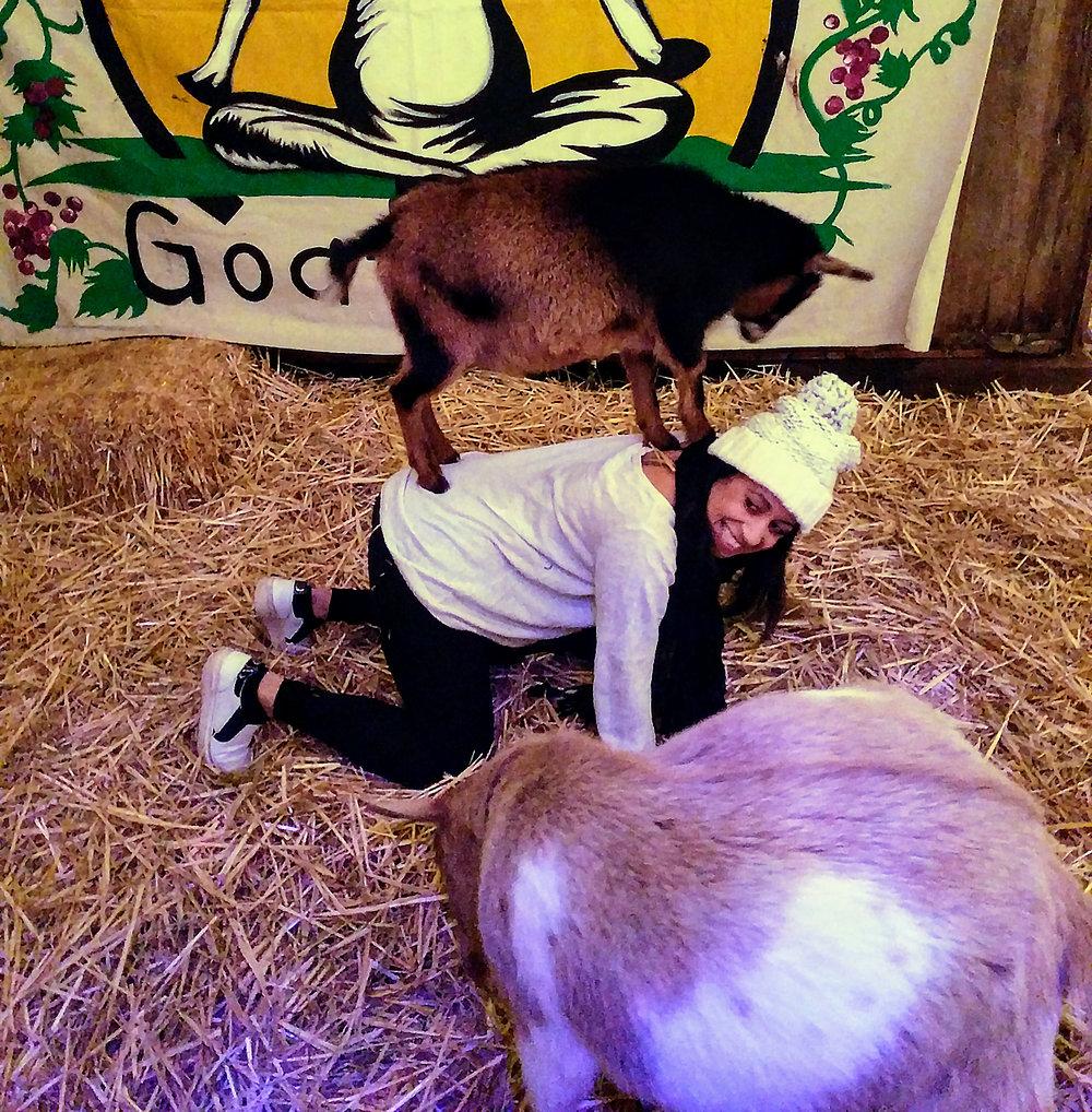 goat-yoga-pose.jpg