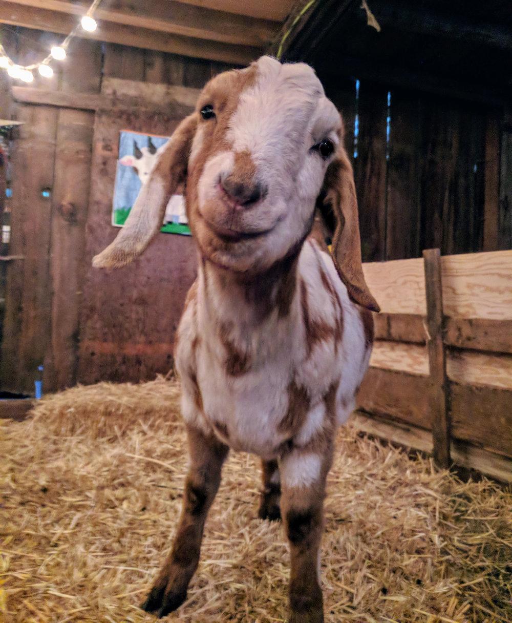 My favorite cutie - Romeo!