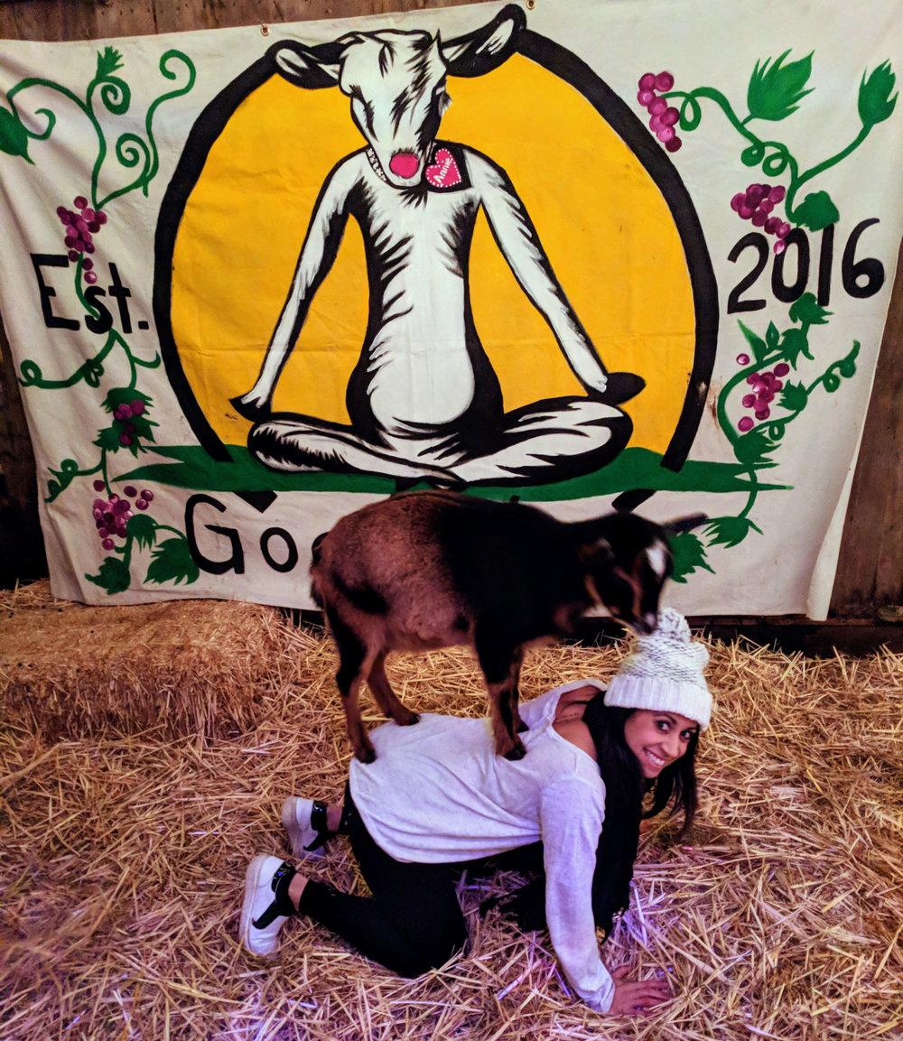 goat-yoga-cat-pose.jpg